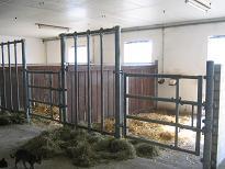 Pferde-Wohlfühlboxen mit Außenpadock auf Artmanns Hof