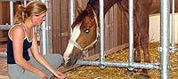 Pferde fressen vor der Box
