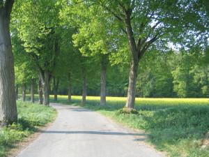 Artmanns Hof am Fuße vom Herrenholz in Horstmar